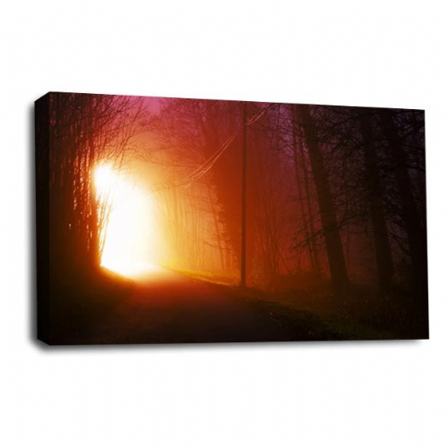 Forest Landscape Canvas Art Light Trees Wall Picture Print